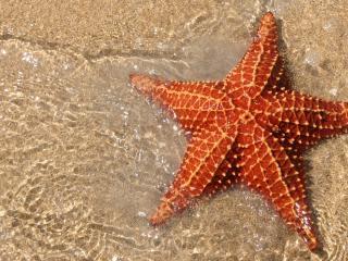 обои Морская звезда у берега фото