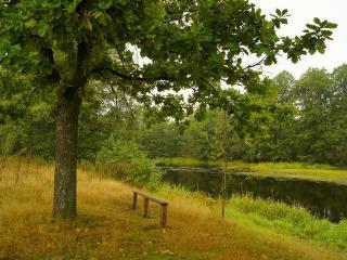 обои Скамейка под дубом, у летнего пруда фото
