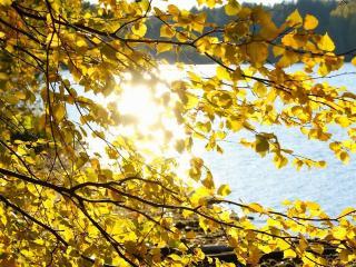 обои Листья,   солнце и вода фото