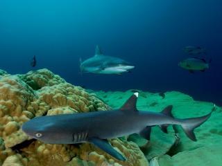 обои Удивительный подводный мир фото