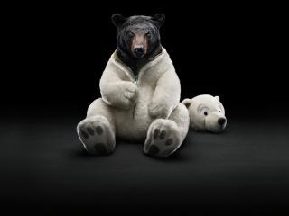 обои Бурый медведь в костюме фото