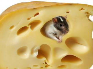 обои Мышонок в сыре фото