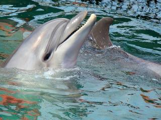 обои Привет от дельфина фото