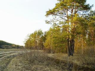 обои Весна,   дорога,   лес фото