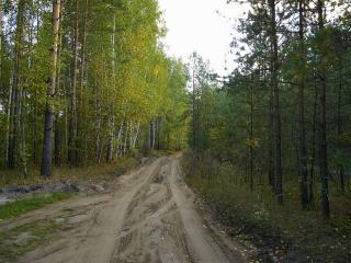 обои Грунтовая лесная дорога фото