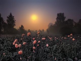обои Вечер,   цветы закрылись фото