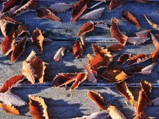 обои Осенние листья под ногами фото