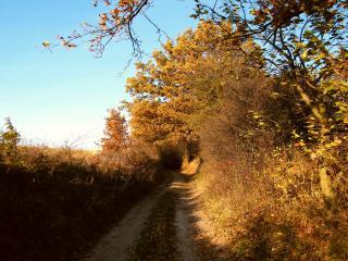 обои Грунтовая дорога у поля фото