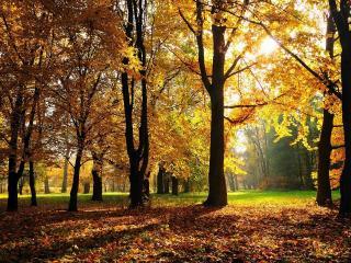 обои Деревья в парке и опавшая листва фото