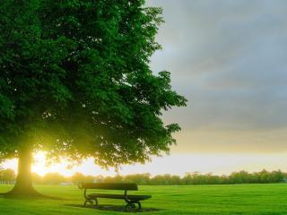 обои Лавочка на зеленом газоне у дерева фото