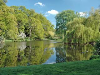 обои Плакучая ива, у летнего пруда с утками фото