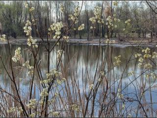 обои Долгожданная весна на пруду фото