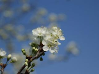 обои Начало цветения весны фото