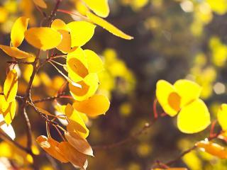обои Желтая листва на солнце фото