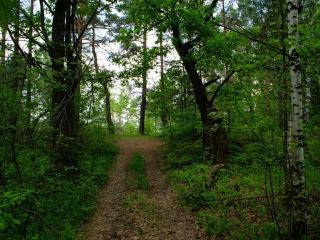 обои Дорога через лес в деревню фото
