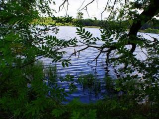 обои Рябина летом у пруда фото