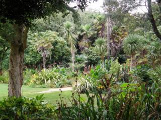 обои Зеленая природа тропиков фото