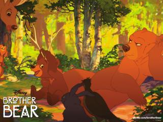 обои Братец медвежонок лес фото