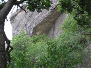 обои Деревья на фоне скалы фото