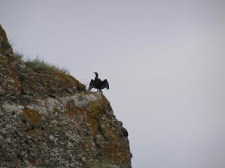 обои Птица на скале фото