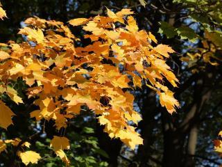 обои Ослепительная осень фото