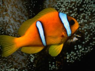обои Броский окрас рыбы фото