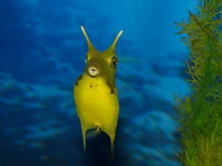 обои Рыбка с рожками в глубине морской фото