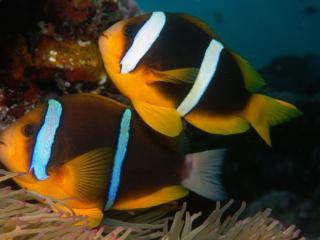 обои Рыбки с дивной окраской фото