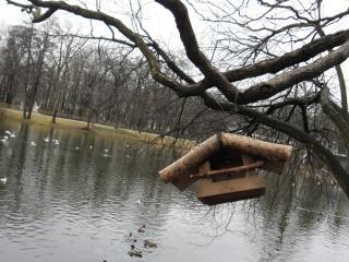 обои Кормушка у озера в парке варшавы фото