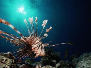 обои В глубинах морских рыба еж фото