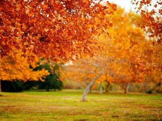 обои Осенние деревья в сквере фото