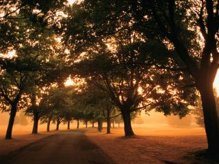 обои Дорога с деревьями на рассвете фото