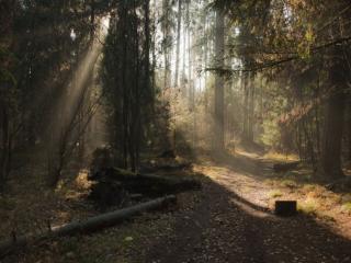 обои Лесная дорога и солнце фото