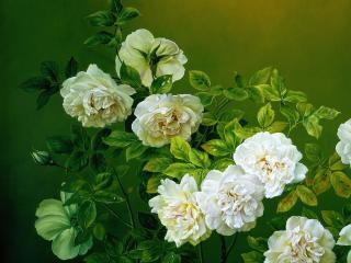 обои Розы чайные с бутонами фото