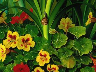 обои Улитка и цветы фото