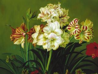 обои Цветы и стрекоза фото