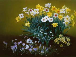 обои Нарциссы,   тюльпаны и примулы фото