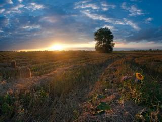 обои Августовское поле фото