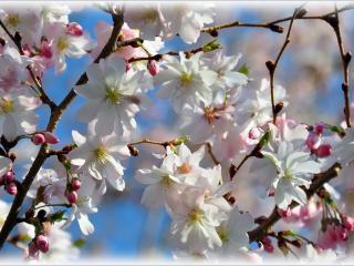 обои Закружила Весна фото