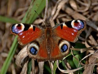 обои Весеннее пробуждение бабочки фото