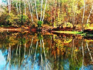 обои Зеркало осеннего пруда фото
