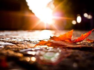 обои Осенняя земля под еле теплым солнцем,   листья на земле фото