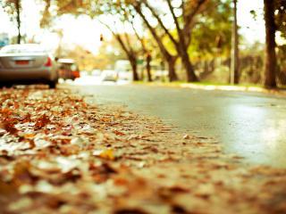 обои Осень в городе,   листья на дорогах фото