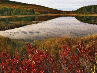 обои Осень у пруда,   прекрасная пора фото