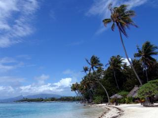 обои Тропическое побережье,   пальмы,   беседки фото