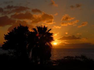 обои Тропический закат,   темные силуэты деревьев фото