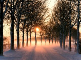 обои Закат освещает зимнюю дорогу,   деревья фото