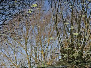 обои Весеннее отражение в воде фото