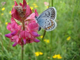 обои Бабочка на розовом цветке,   красочный живой мир фото