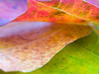 обои Крупный план осеннего листа фото